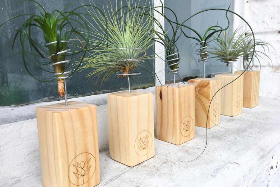 Plantas de aire conoce las tillandsias vivo boreal - Pedestal para plantas ...