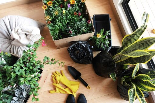 Plantas + Materas